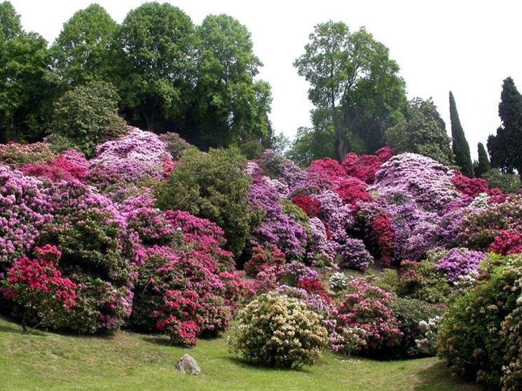 significato rododendro-7