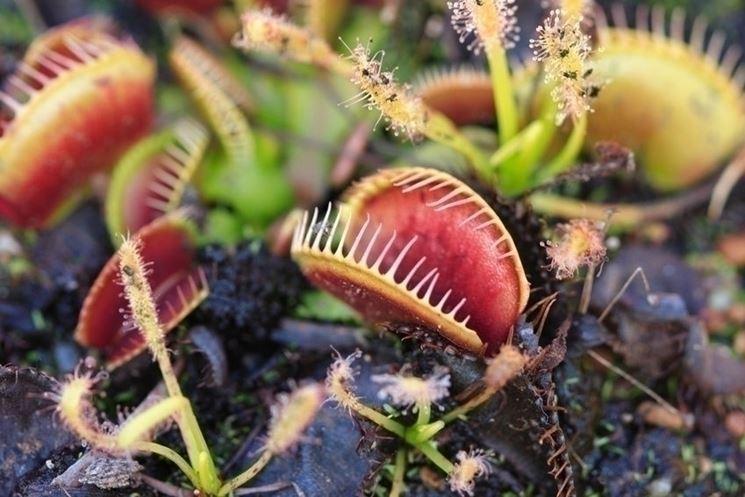 Proprietà della  pianta di aloe