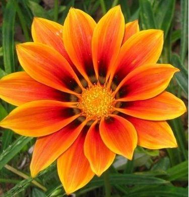 fiori a domicilio Prato