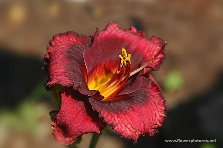 inviare fiori Altamura