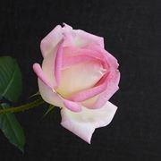 inviare fiori Padova