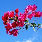 inviare fiori Trieste