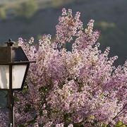 spedire fiori a Brescia