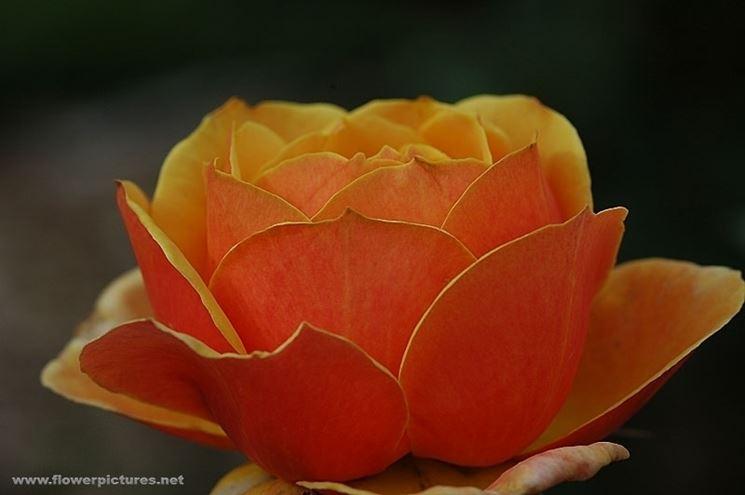 spedizioni fiori Bari