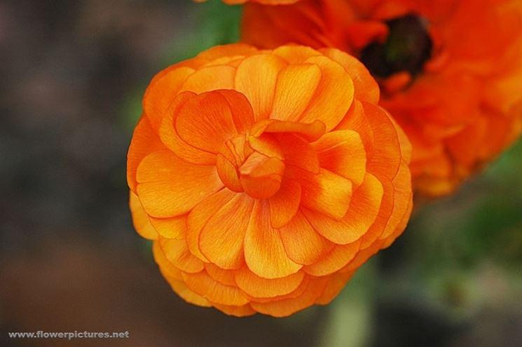 spedizioni fiori Palermo