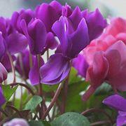 spedizioni fiori Prato