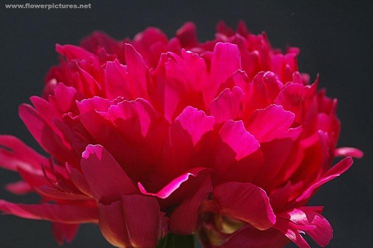 spedizioni fiori Roma