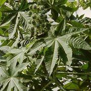 piante medicinali-7