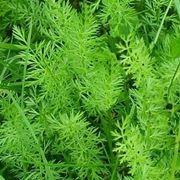 piante medicinali-8
