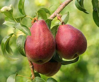 frutteto