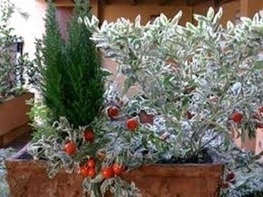fioriere da balcone-7