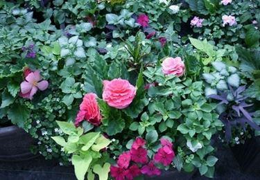 vasi e fioriere : Fioriere da balcone