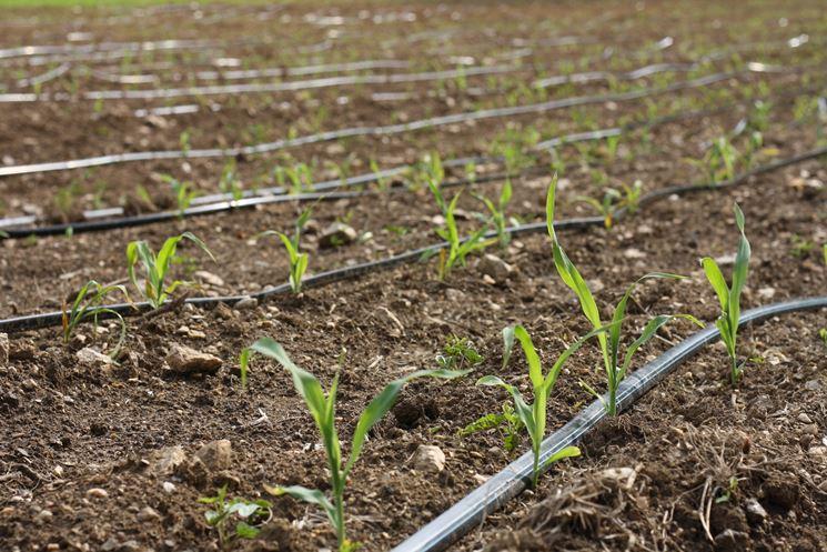 Concimazione e irrigazione