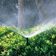 Semina e irrigazione