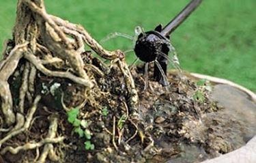 Come montare i gocciolatori impianto irrigazione a for Gocciolatori per irrigazione a goccia