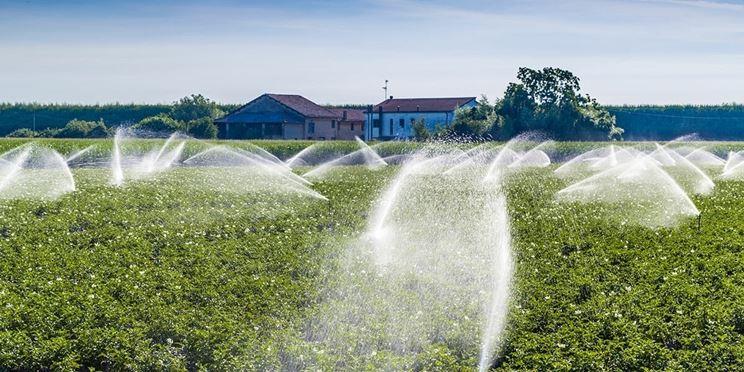 Tubi Irrigazione Fuoriterra In Agricoltura Impianto