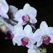 Come prendersi cura delle orchidee