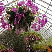 concimazione delle orchidee