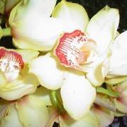 cura delle orchidee-4