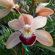 orchidee selvatiche-7