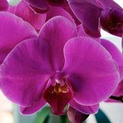 vendita delle orchidee-3