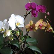 vendita delle orchidee-5
