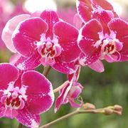 vendita orchidee-5