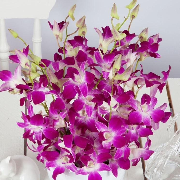 Orchidee dendrobium come coltivarle piante da - Orchidee da appartamento ...