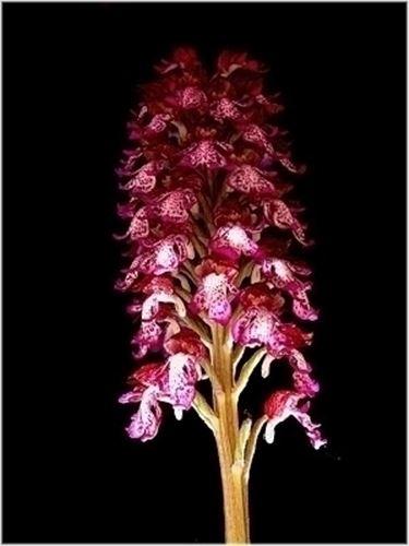Piante Da Appartamento Orchidea.Peculiarita Orchidee Rosa Piante Da Appartamento Orchidee Rosa