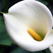 bouquet bianche a gamdo medio