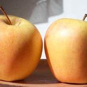 Moltiplicazione melo