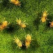 coltivazione orto: parassiti e malattie