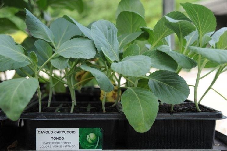 piante da orto-2