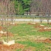 piante da orto-5