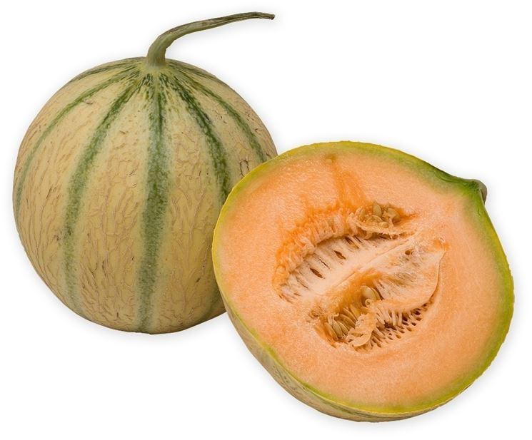 Benessere E Salute Il Melone A Tavola Cucurbitacee Benessere E Salute Il Melone A Tavola