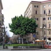 albero di ficus-3