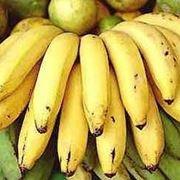 Banano Musella lasiocampa