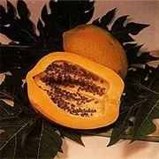 Papaia-3