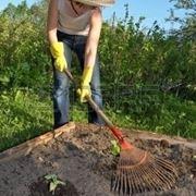 lavori nel orto agosto-5