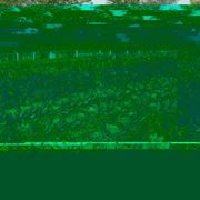 agricoltura biologica-8