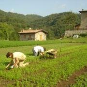 Elenco dei fertilizzanti consentiti in agricoltura biologica
