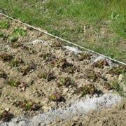 orto biologico e la protezione dalle lumache-3