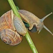 orto biologico e la protezione dalle lumache