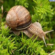 orto biologico: protezione dalle lumache-4