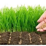 Fiori da semina e da bulbo