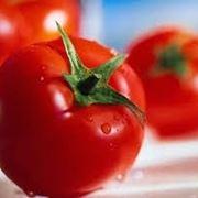 sementi pomodori