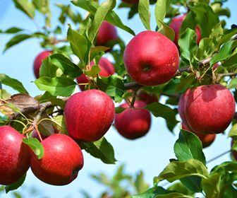 Orto e frutteto