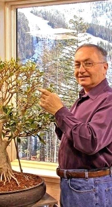 cura di un ficus bonsai-1