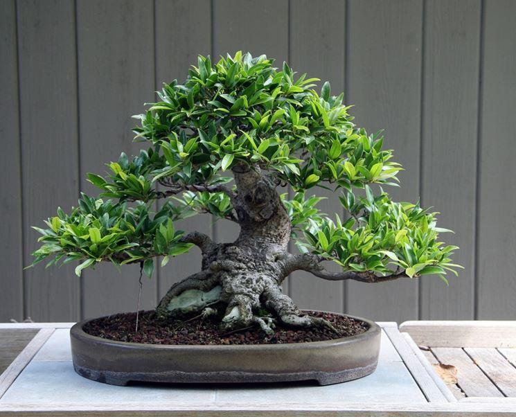 Illuminazione artificiale per bonsai lof fei artificiali piante