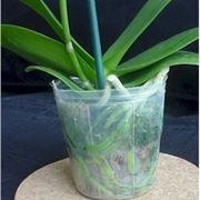 coltivazione orchidee in vaso-9